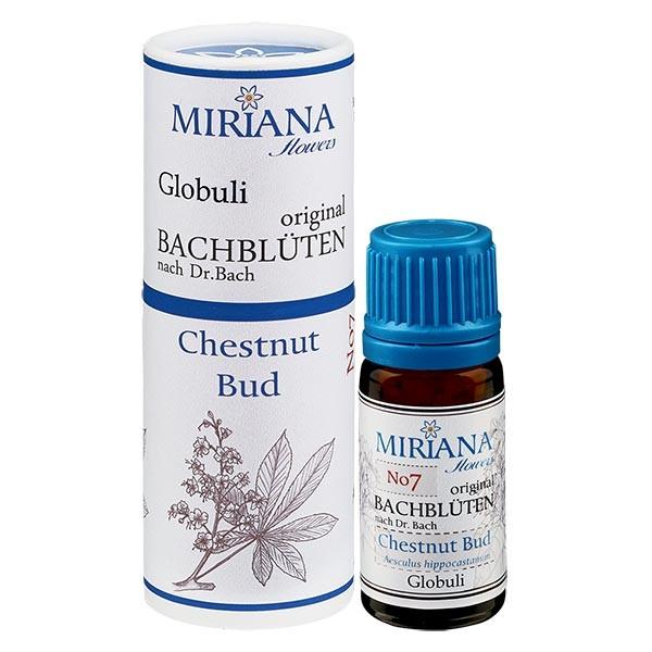 """7 Chestnut Bud, 10g """"Kügelchen"""", MirianaFlowers"""