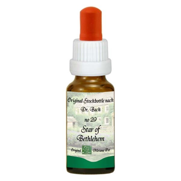 29 Star of Bethlehem, 20ml Stockbottle, MirianaPet.