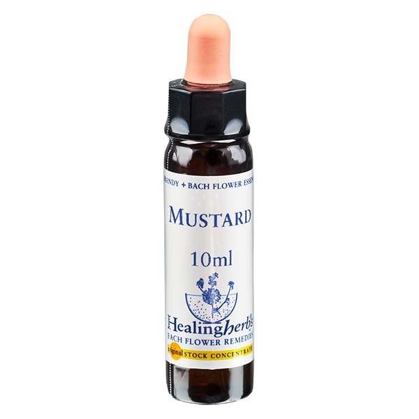 21 Mustard, 10ml Essenz, Healing Herbs