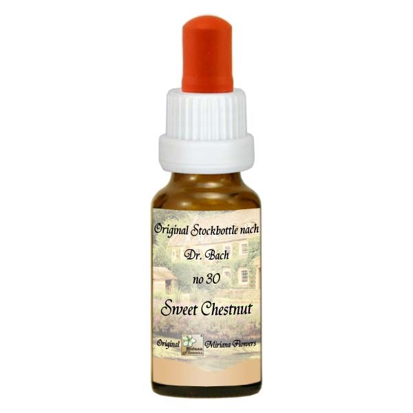 30 Sweet Chestnut, 20ml Essenz, MirianaFlowers